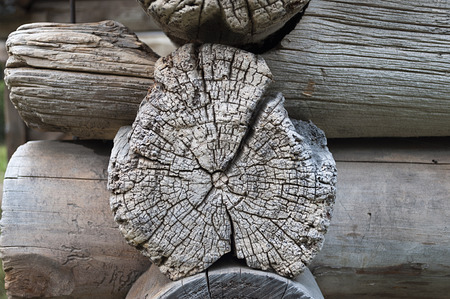 Texture of weathered cracked end of log of ancient wooden chapel
