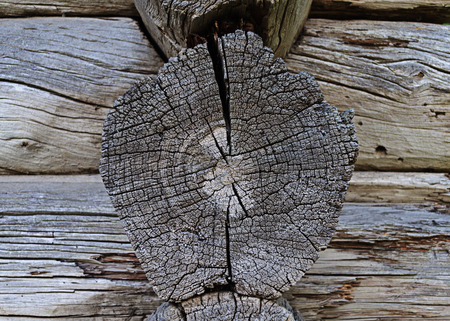 Texture of cracked butt-end of log of old wooden house Stock Photo