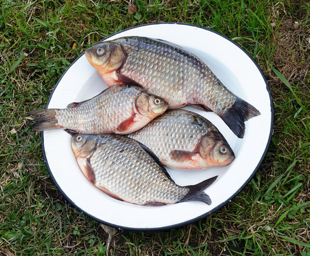 White metal dish with fresh carp on green grass background photo