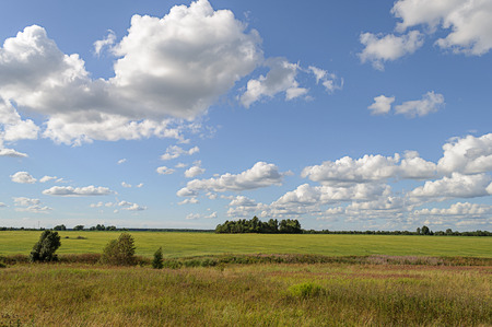 lawn grass: Summer rural landscape with green meadow and forest on the horizon, white clouds in blue sky Stock Photo