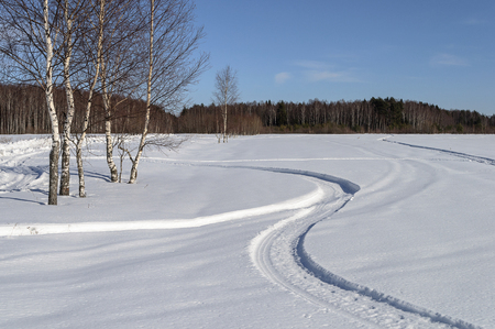 snowy field: Birch trees and tracks in snowy field on the outskirts of the village, sunny winter day
