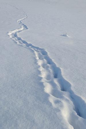 snowy field: Footprints in snowy field, sunny winter day