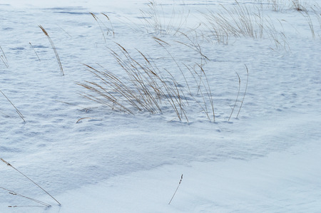 dry grass: Dry grass in snowy field. Nature winter background