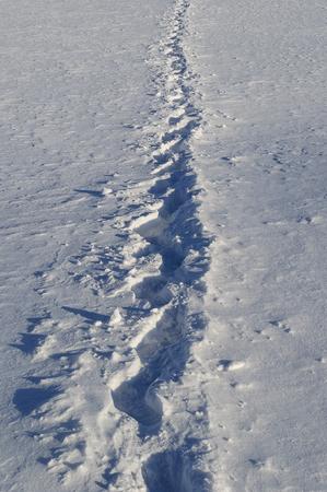 snowy field: Human footprints in snowy field, sunny winter day