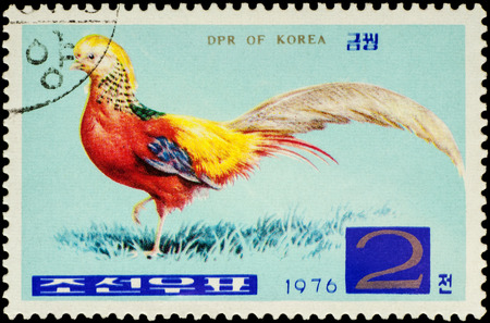 chinese postage stamp: MOSCOW, RUSSIA - FEBRUARY 20, 2016: A stamp printed in North Korea shows golden pheasant (Chrysolophus pictus), series Pheasants, circa 1976