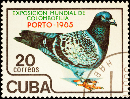 philatelic: MOSCOW, RUSSIA - FEBRUARY 20, 2016: A stamp printed in Cuba shows pigeon, devoted to the International Pigeon Exhibition PORTO 1985 - Porto, Portugal, circa 1985 Editorial
