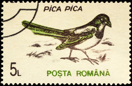 pica: MOSCOW, RUSSIA - FEBRUARY 20, 2016: A stamp printed in Romania shows Eurasian magpie or common magpie (Pica pica), series Birds, circa 1993