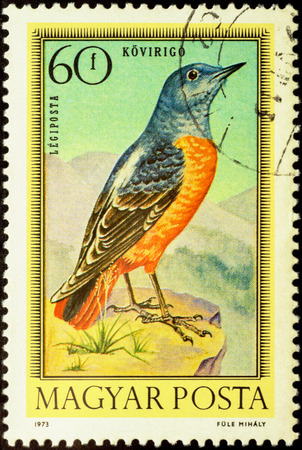 catbird: MOSCOW, RUSSIA - FEBRUARY 25, 2016: A stamp printed in Hungary shows common rock thrush (Monticola saxatilis), series Birds, circa 1973