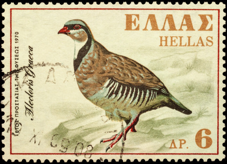 chasing tail: MOSCOW, RUSSIA - FEBRUARY 22, 2016: A stamp printed in Greece shows rock partridge (Alectoris graeca), series European Nature Conservation Year, circa 1970