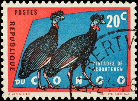 philatelic: MOSCOW, RUSSIA - FEBRUARY 20, 2016: A stamp printed in Congo shows crested guineafowl (Guttera edouardi), series Protected Birds, circa 1963