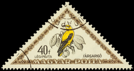 oriole: MOSCOW, RUSSIA - FEBRUARY 29, 2016: A stamp printed in Hungary shows bird Eurasian golden oriole (Oriolus oriolus), series Birds, circa 1952