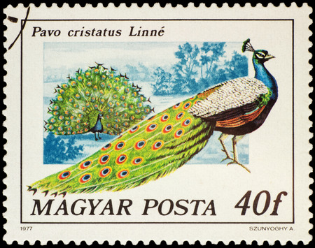 indian postal stamp: MOSCOW, RUSSIA - FEBRUARY 28, 2016: A stamp printed in Hungary shows Indian peafowl (Pavo cristatus), series Birds - Peacocks and Pheasants, circa 1977