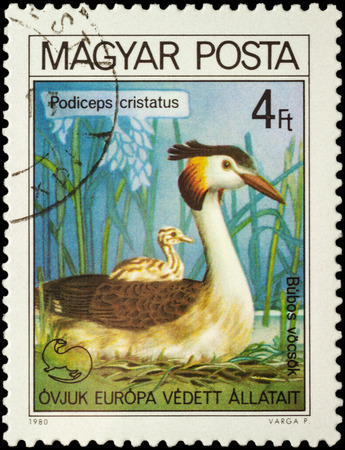 crested duck: MOSCOW, RUSSIA - FEBRUARY 28, 2016: A stamp printed in Hungary shows the great crested grebe (Podiceps cristatus), series Birds - European Nature Conservation Campaign, circa 1980
