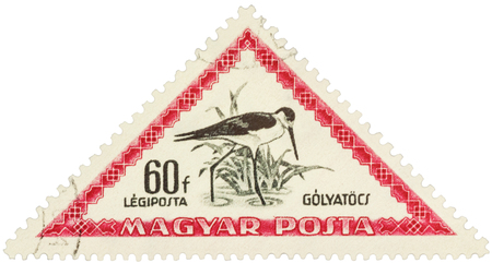 himantopus: MOSCOW, RUSSIA - FEBRUARY 29, 2016: A stamp printed in Hungary shows bird black-winged stilt (Himantopus himantopus), series Birds, circa 1952 Editorial