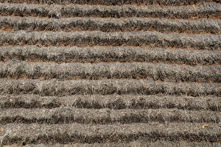 thatched roof: Close up of thatched roof texture of old country house