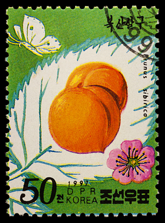 Moscow, Russia - January 24, 2018: A stamp printed in DPRK (North Korea) shows Apricots (Prunus sibirica), series Fruits - Apricots, circa 1997