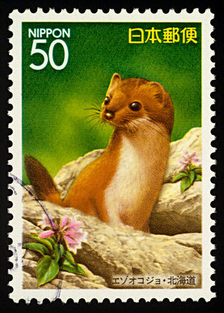 Moscow, Russia - February 02, 2018: A stamp printed in Japan shows Siberian Weasel (Mustela sibirica), series Prefectural Stamps - Hokkaido, circa 1997