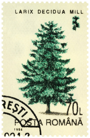 Moscow, Russia - December 12, 2019: stamp printed in Romania shows larch tree (Larix decidua), series Trees, circa 1994