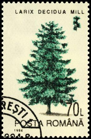Moscow, Russia - December 31, 2019: stamp printed in Romania shows larch tree (Larix decidua), series Trees, circa 1994 Editorial