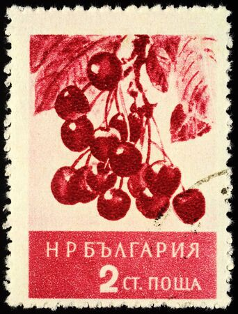 "Moscow, Russia - January 25, 2020: stamp printed in Bulgaria shows wild cherry, sweet cherry, or gean (Prunus avlum), series ""Fruit"", circa 1956"