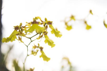yellow: Yellow Flower Stock Photo