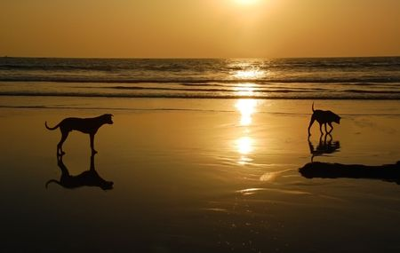 Two dogs on the beach of the Indian ocean at sunset. Stock Photo