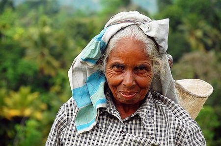 Portrait of Aged Tea Picker Editorial