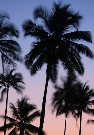 vibrating: Silhouettes of vibrating palm trees at dawn in the indian state of Goa  Stock Photo