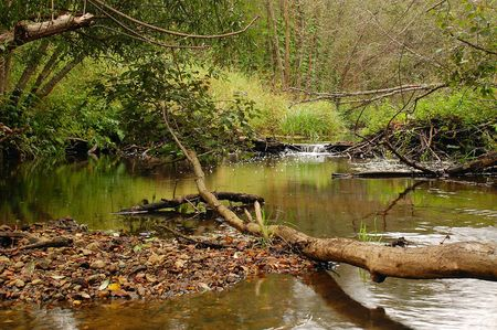 Fallen tree and stones in the middle of the Moloksha river in Central Russia photo