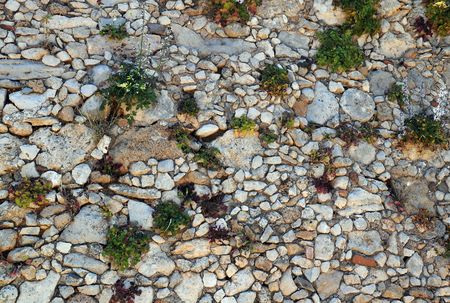 rethymno: Background of  flowers growing from the ancient rock wall in the Venetian Fortezza (fortress) in the town of Rethymnon (Rethymno) on island Crete in Greece.