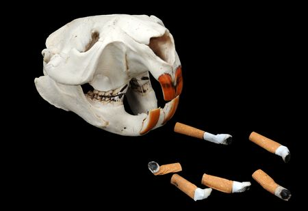 Beavers skull and cigarette butts against black background photo