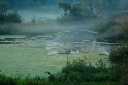 Foggy swamp in Central Russia in the late summer