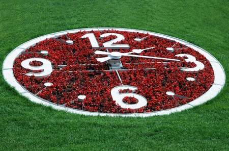 against the clock: Flower clock against the background of green grass