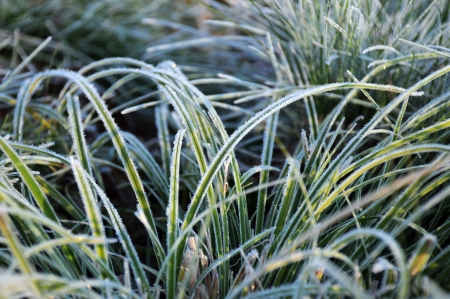 Closeup image of green frozen grass in the late fall