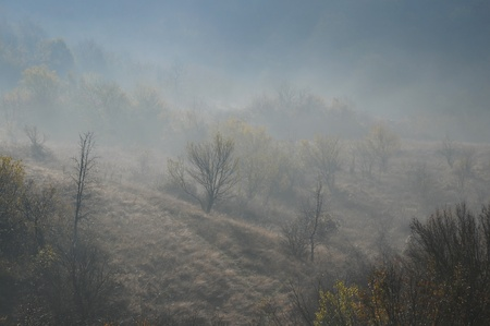 foggy hill: Foggy hill slope and vegetation in the late fall
