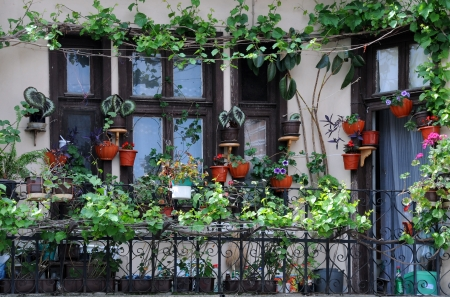 Flowerpots and house plants on the balcony Stock Photo - 13735158