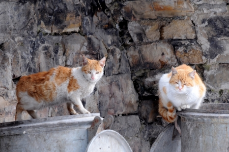 Two stray cats sit on garbage bins in the European city photo