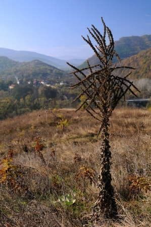 serbia and montenegro: Dry plant in the fall in the background of the village in Balkan mountains on a sunny day