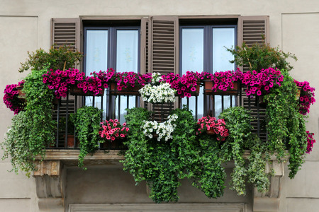 Flowerpots and house plants on the balcony photo