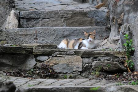 veliko tarnovo: Cat on the steps in the Old Town of Veliko Tarnovo in Bulagaria