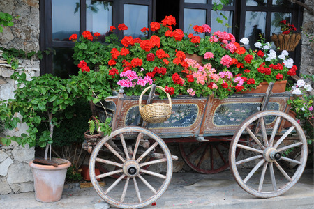 Garden in the cart in the city of Veliko Tarnovo in Bulgaria