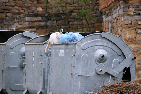 tarnovo: VELIKO TARNOVO, BULGARIA - MARCH 15, 2016: Stray cat sits on the garbage container Editorial