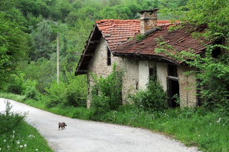 molino de agua: molino abandonado y un gatito en el camino de tierra en los Balcanes