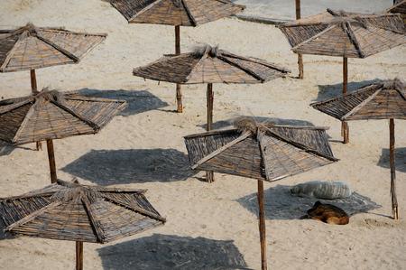 Two doga take a nap under umbrellas on the sandy beach Stock fotó