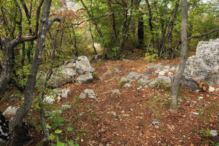 Rocks, stones and fallen leaves in the woods in the fall 免版税图像
