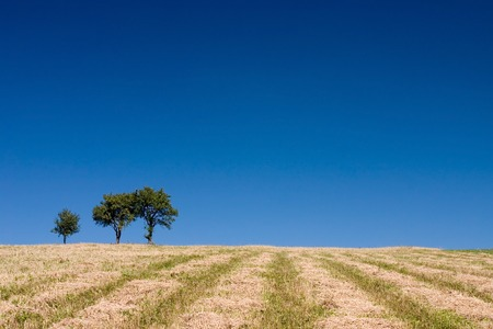 Summer abstract landscape with three trees and straw photo