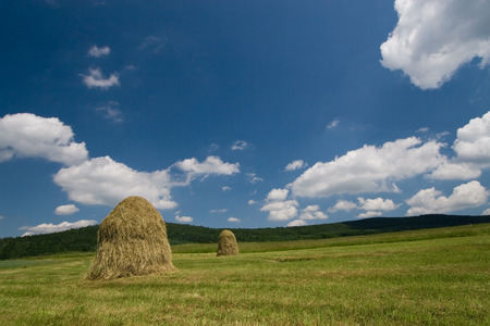 Two haycocks on the meadow and blue sky Stock Photo - 1414800