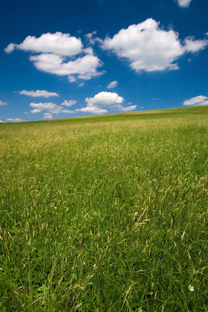 Green field and blue sky with cumulus clouds Stock Photo - 1414851