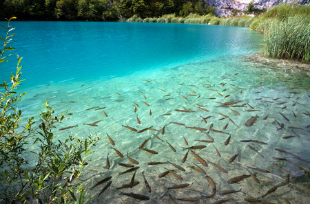 Lake full of fishes in Plitvice Lakes National Park Stock Photo