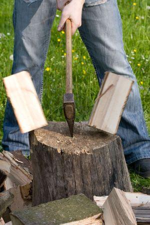 Zwei Fliegen Stücke Holz auf log Standard-Bild - 3040823